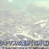 明日香さんの歌う「長良川」名古屋テレビ クロージング 1999年ごろ
